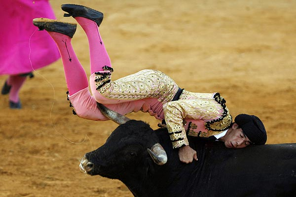 Spanish apprentice matador Saul Jimenez Fortes is tossed by a bull during a bullfight in Benalmadena, near the Spanish southern town of Malaga.