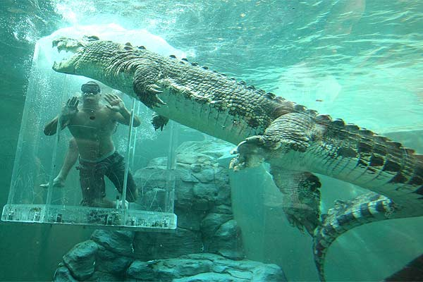 Willie Mason Goes Face To Face With Crocodile Stuff Co Nz