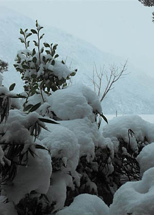 South Island Snow May 27 and 28, 2010