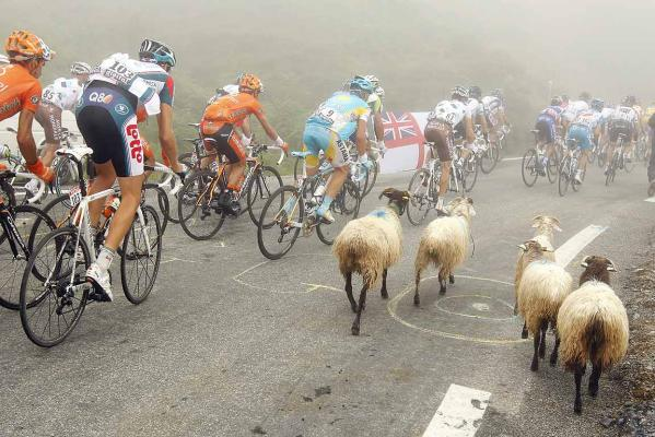 Riders go around sheep during the 17th stage of the Tour de France cycling race from Pau to Tourmalet Pass.