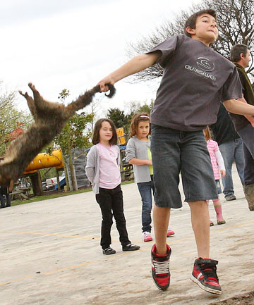 COURTING CONTROVERSY: A boy has a go at throwing a dead possum during the Colyton School Possum Count Gala this month.