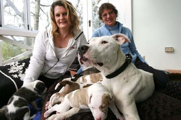SURVIVAL STORY: Pepper was rescued from death row at a pound with her 12 puppies. Behind are carers Deborah Lees and her mum Fay.