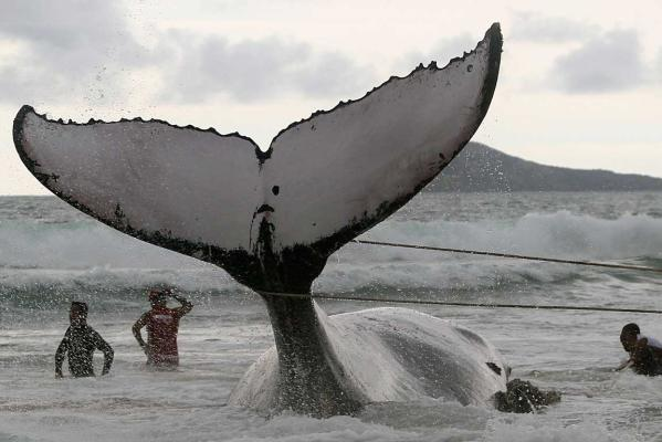 Reuters Images of the Year, photo of whale.
