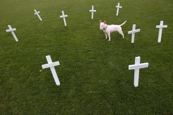 Reuters Images of the Year, photo of dog standing amongst graves.