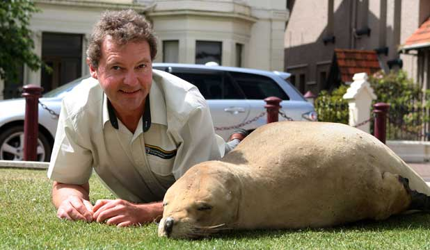 LIFELIKE: DOC Murihiku area manager Dave Taylor with the dummy female sea lion that will be used to try to keep other sea lions away from people at Curio Bay.