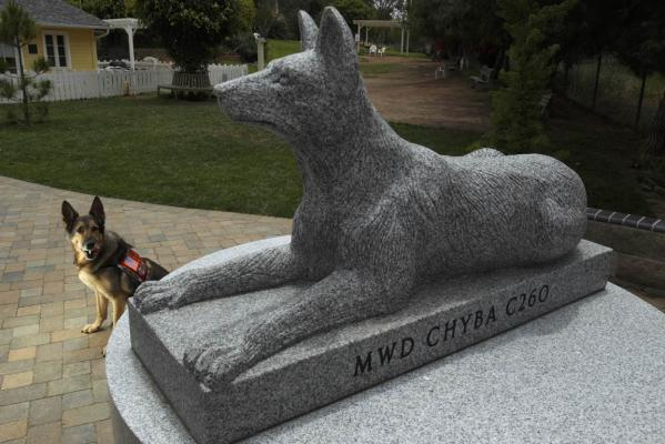 Chyba, a 12-year-old former military dog who served in Iraq with the Army, poses in behind a military working dog monument crowned with her likeness in stone, at the Rancho Coastal Humane Society in California.