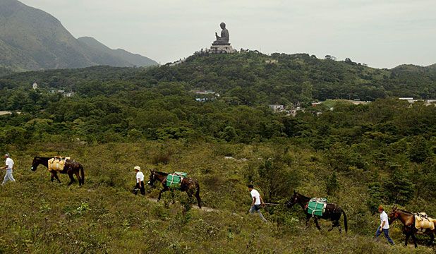 MAJESTIC FIGURE: A column of mules trots in front of the world's tallest outdoor seated bronze Buddha on  Hong Kong's Lantau Island.