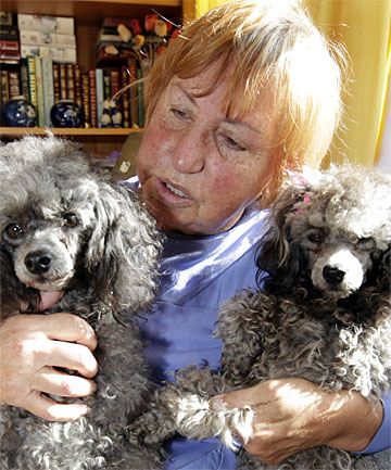 SAVAGE ATTACK:  Te Aroha's Barbara Perkins with her remaining toy poodles Matilda and Isabelle.