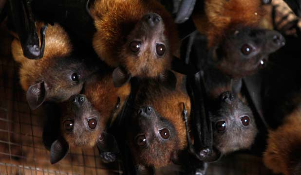 dog digs up batty bunch at mail centre stuff co nz