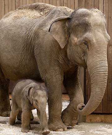 A new sperm bank for elephants is close to fruition in the US.