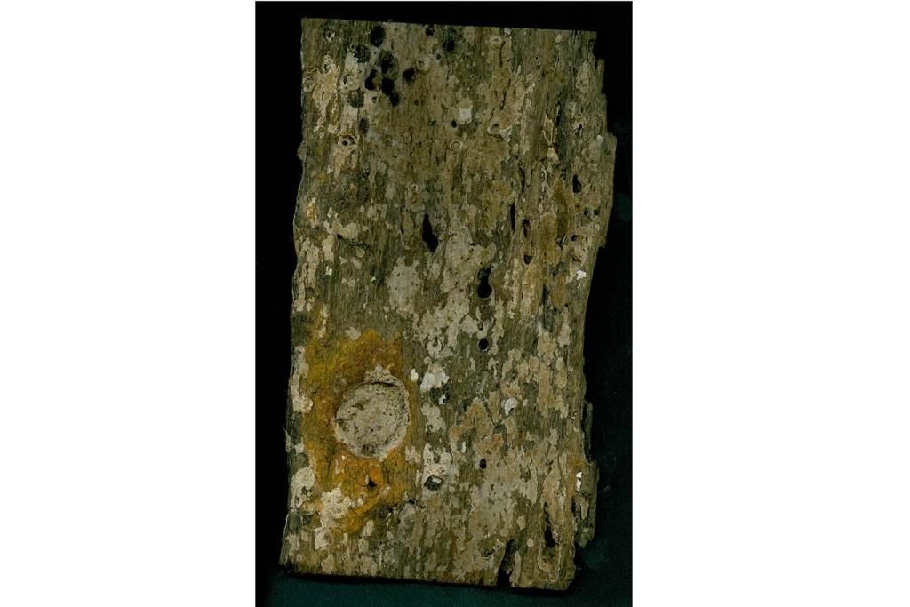 CICILLIA MARIA: Noel Hilliam believes this plank of wood dated 1556 found off the west coast of the Kaipara is from the Spanish sailing ship Cicillia Maria that was lost out at sea and never found.