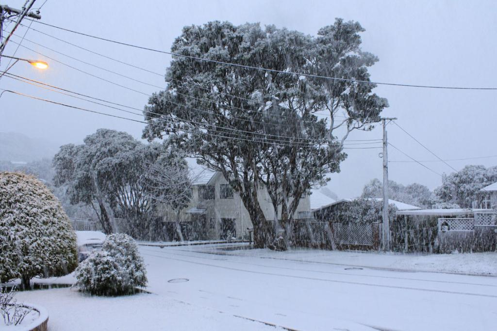Snow turned Johnsonville into a winter wonderland.