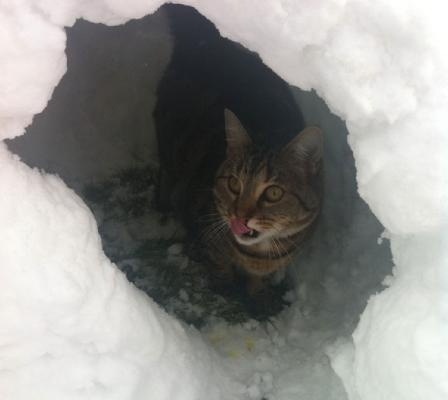 Cat in an igloo