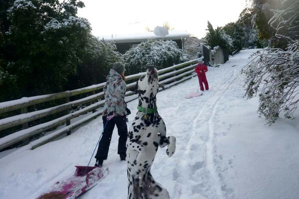 Enzo the dalmation, snow