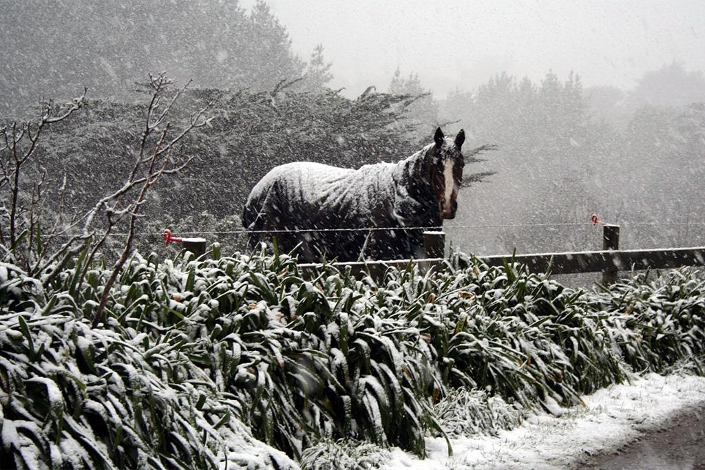 A horse looks a little unhappy about being left out in the cold in Ohariu.