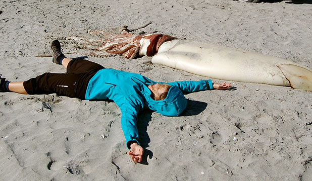 This big: A tourist lies beside the giant squid found washed up on Farewell Spit.