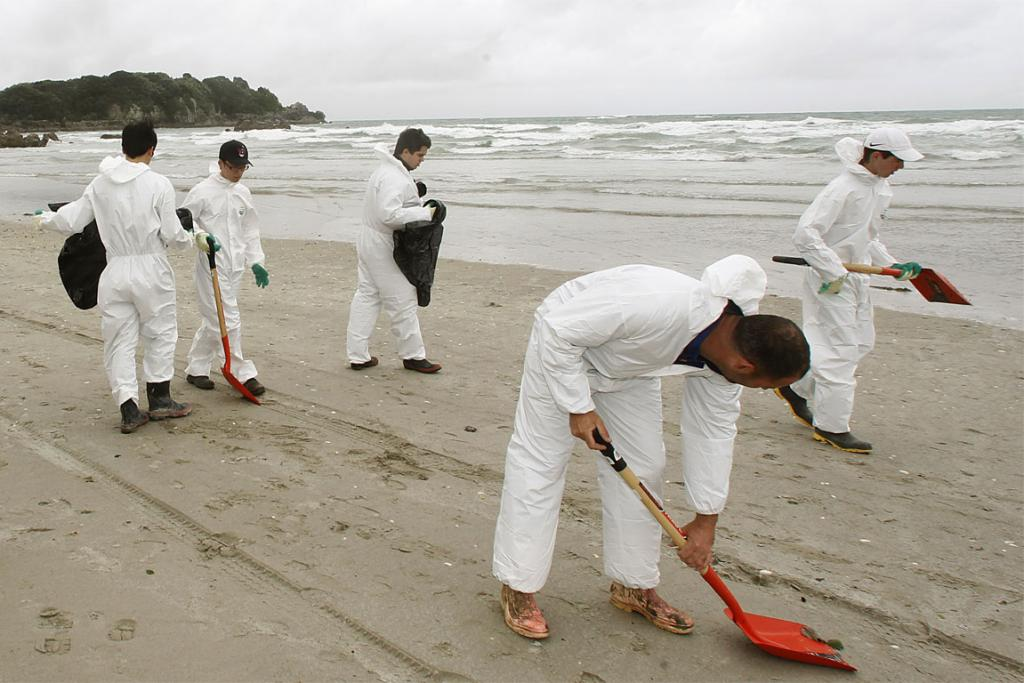 LONG JOB: Volunteers help clean up the oil from the beach at Mt Maunganui.