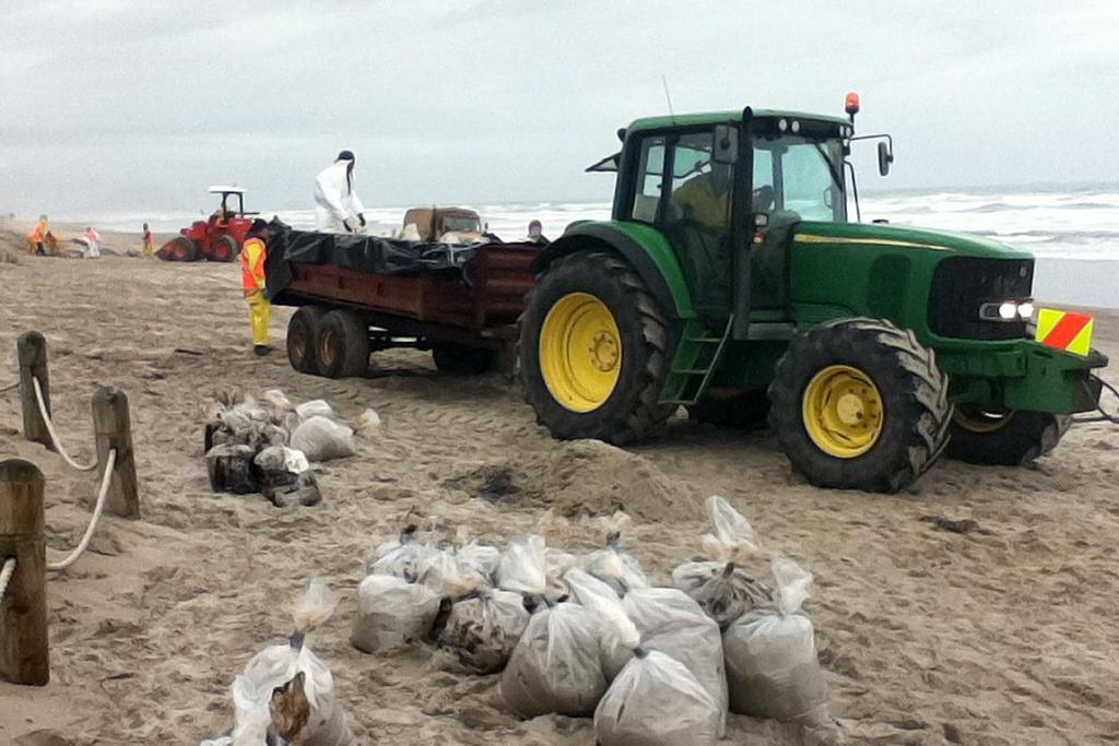 LOADING: Bags full of oil are collected from the beach at Papamoa.