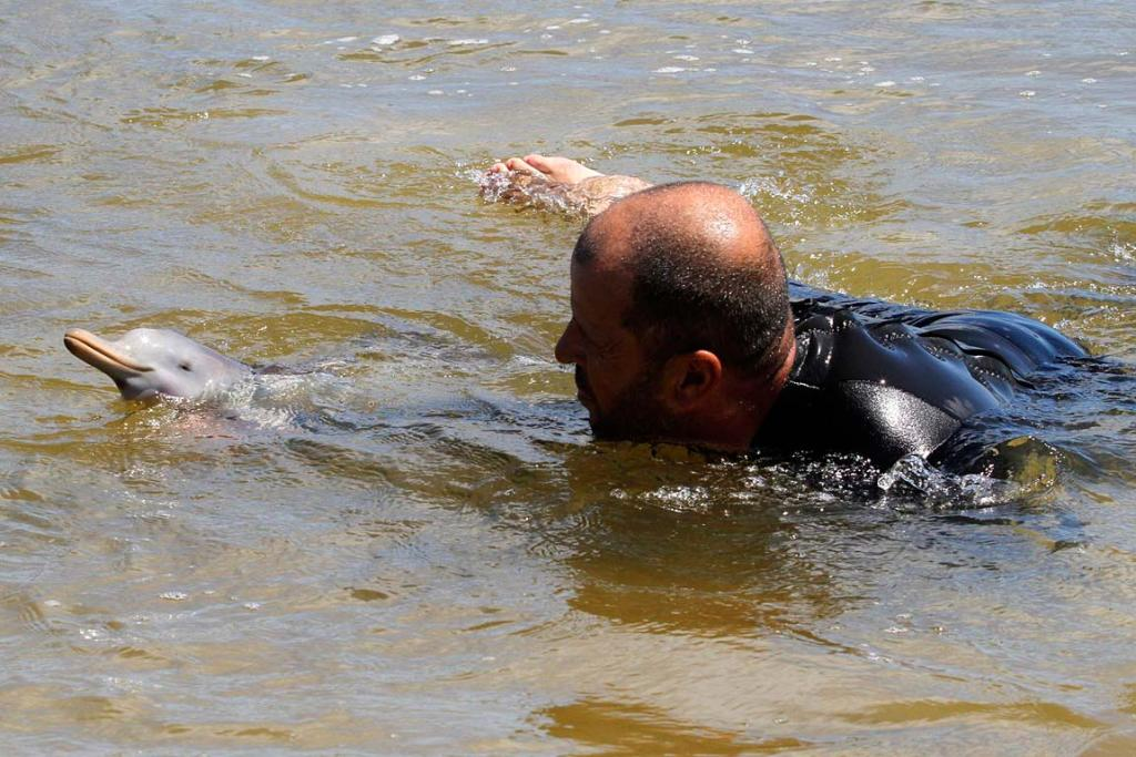 The head of the NGO SOS Rescate Fauna Marina, Richard Tesore, swims with the rescued baby La Plata dolphin.