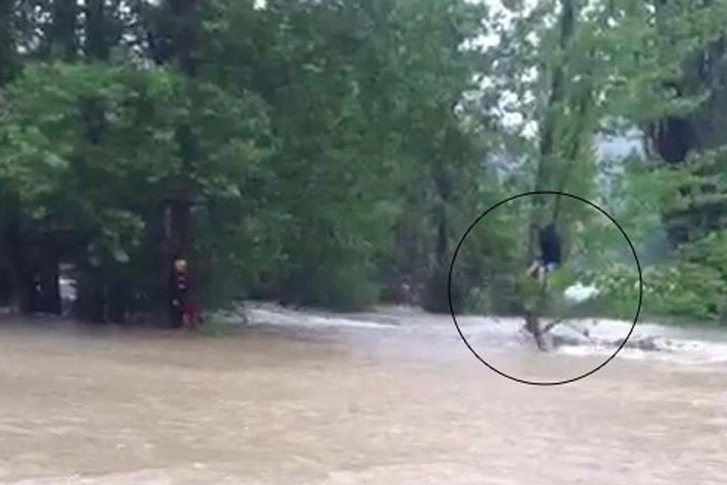 Tourists take refuge in trees to escape Nelson flooding.