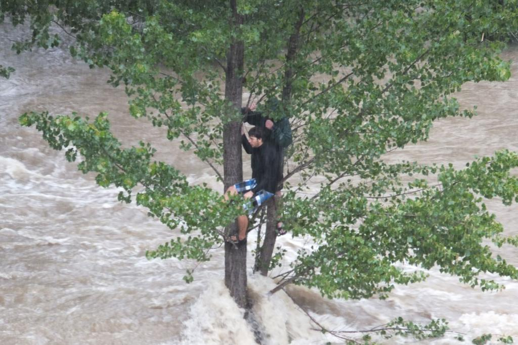 A tourist clings to a tree after getting cut off by the water.