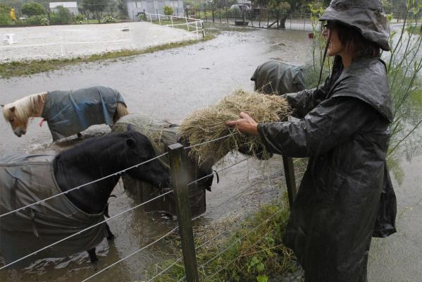 Vicki Mathison feed hay to her miniature horses in a flooded paddock on Ranzau Road East.