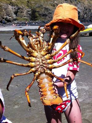 Giant crayfish and other creatures   Stuff.co.nz