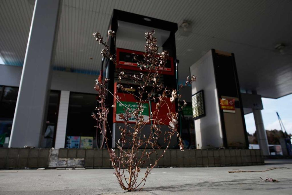 A weed is seen growing out of the cracks at a petrol station on Route 6.