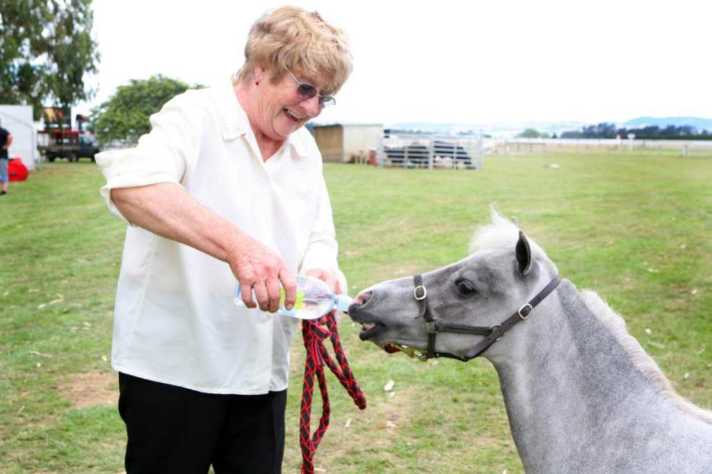 WINTON A & P SHOW: Barbara Kennedy, of Myross Bush, gives her miniature horse Sparkling Gem a drink after a long hot day.