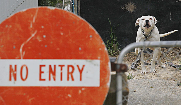 CHAINED UP: A second dog was seen at the rear of the property in Dorset Grove, Porirua, where the toddler was attacked.