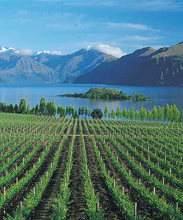 ARRESTING LANDSCAPE: Wanaka provides a visual spectacle of lake, mountains and vineyards.