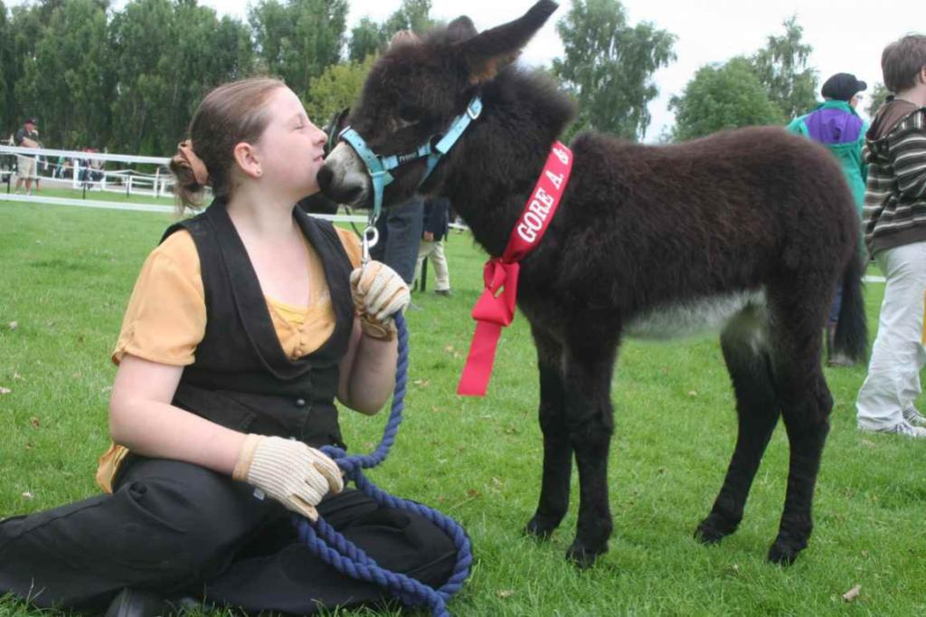 GORE A & P SHOW: Five-week old donkey Eva, with her handler Megan Coster, was a crowd-stopper.