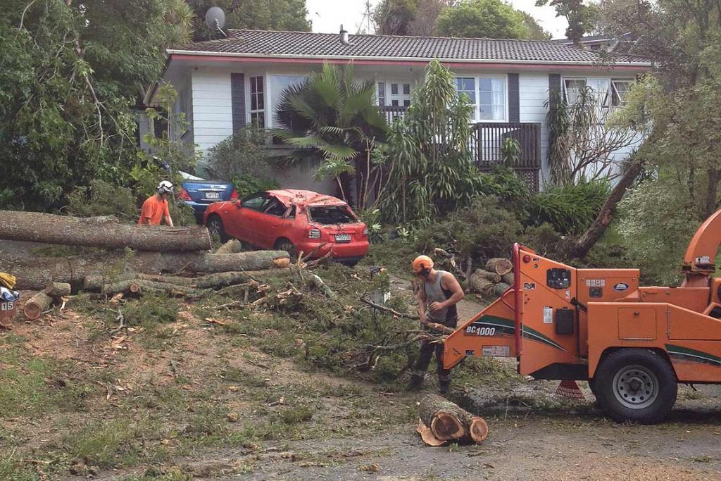 Workers clear away a 40 metre tree that crashed down on a car in West Glade Crescent, Birkenhead, Auckland.