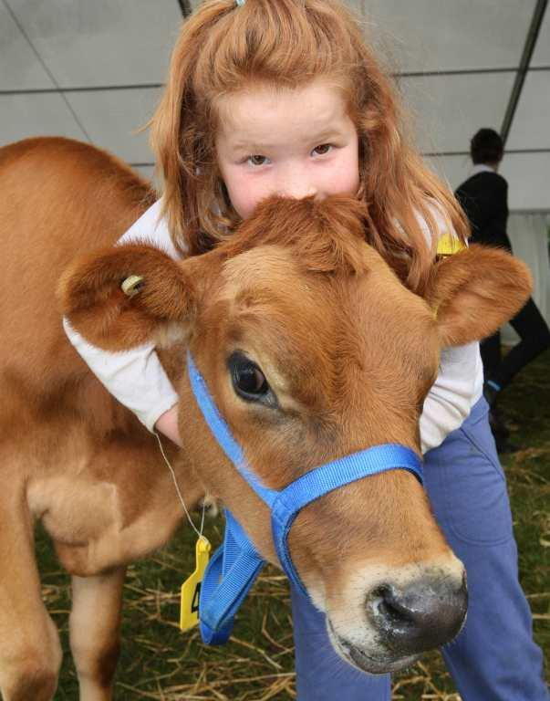 SOUTHLAND A & P SHOW: Bailey Bennett, 6, of Tuatapere, with her calf Rosie at the SBS Bank Southland A&P Show at Donovan Park, Invercargill.