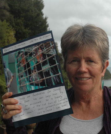 Small steps: Carol Gorham of Lowry Bay hopes Lower Hutt schools and residents will get behind her campaign to help build a new enclosure for Jonny the sun bear.