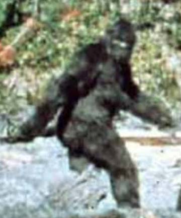 BIG FOOT A Still From 1967 Film Purported To Be Of Large