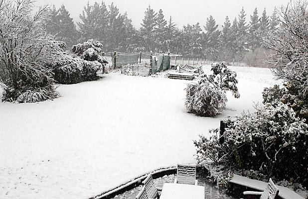 WHITE OUT: Snow lies thickly on a garden in the hills above Rangiora.