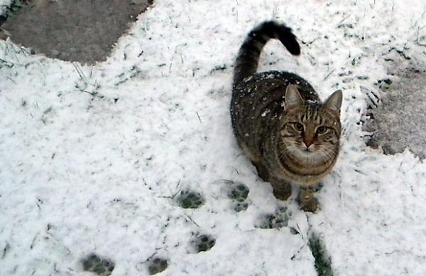 Eli the cat loves snow
