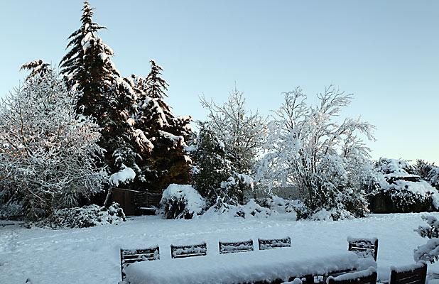 CRISP: Snow lies thickly on a garden near Rangiora.