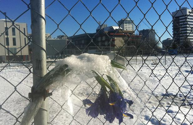 QUIET SPOT: Snow rests on a memorial flower left at the former site of the CTV building today.