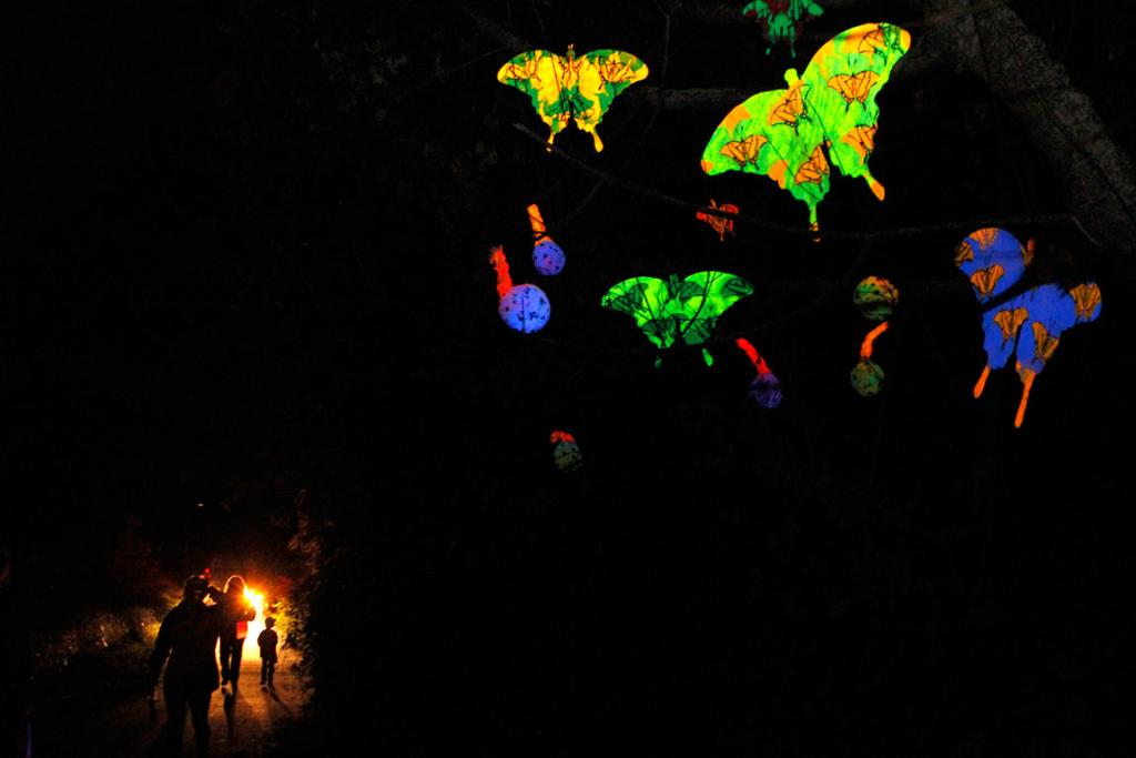 Glow in the dark butterflies lit up on the pathway of the Matariki celebrations in Nelson.