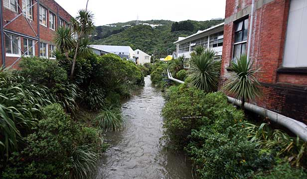 Kaiwharawhara Stream is now contaminated with high levels of lead and zinc and it does not provide a good habitat for birds and fish, according to an environmental report from last year.
