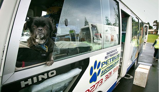 DOG DAYS: Bandit stands guard as another Petbus customer says goodbye to a special friend.