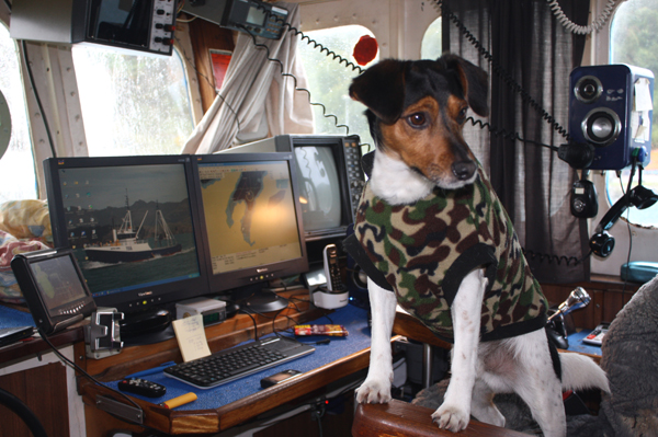 Canine captain: Seven-year-old Sonson was raised on the boat and is quite at home on the ocean