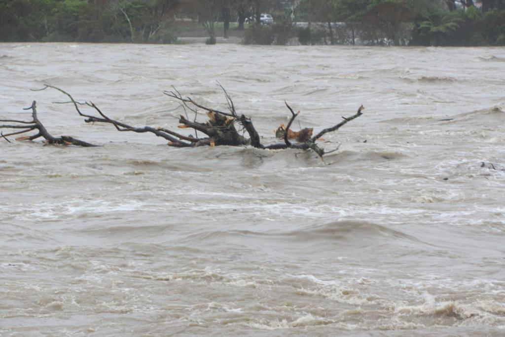 A log floats down the flooded Buller River.