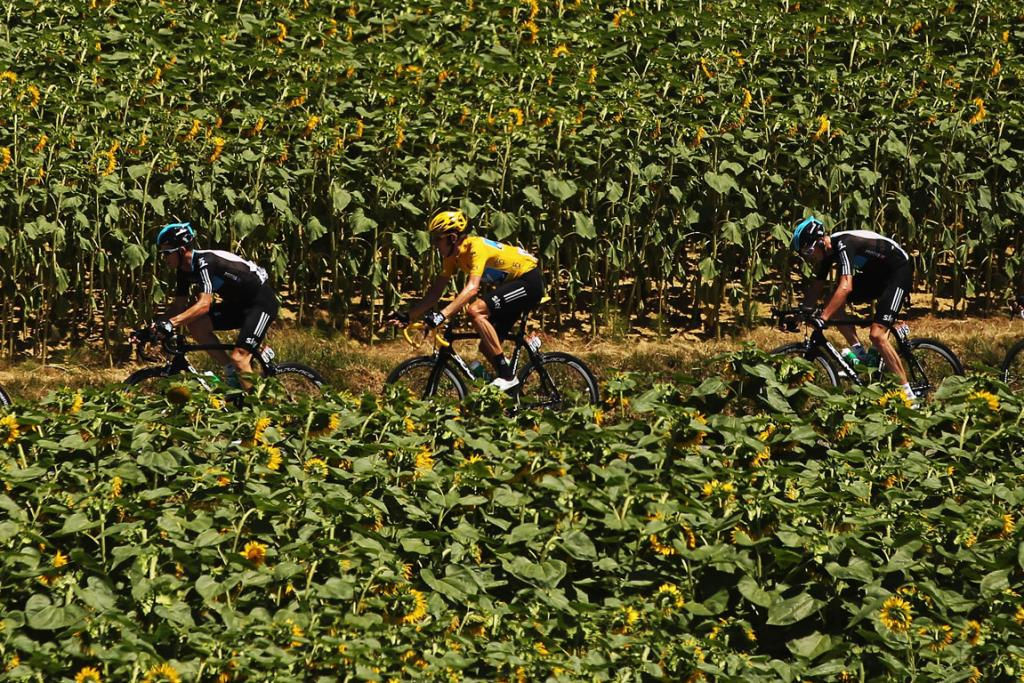 SKY Procycling team members, including tour leader Bradley Wiggins (C) ride through a sunflower field during the 15th stage.