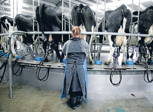 BIG EXPENSE: Farmers need to look after their staff and their animals equally as well.