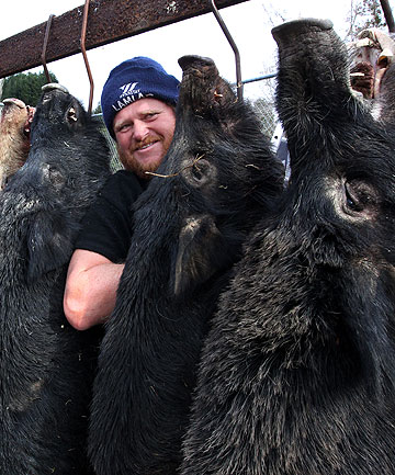 HEAPS OF HOGS: ''Pork'' Hutchinson, from Whangamomona, with some of the lighter beasts weighed in at the Uruti School pig hunt competition.