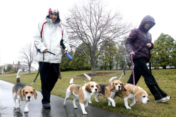 beagles rain landscape gallery