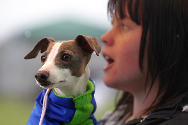 Caitlin McPhail waits to compete with her italian greyhound Breeze